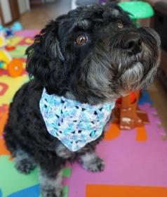 ♡ Hundehalstuch Farbverlaufswolle blau ♡ amigoll9 ♡ Handmade ♡