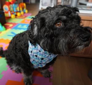 ♡ Hundehalstuch Farbverlaufswolle blau ♡ amigoll9 ♡ Deko ♡ Handarbeit ♡ - Handarbeit kaufen