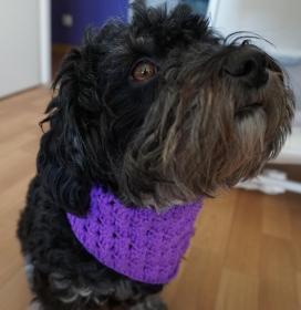 ♡ Hundehalstuch Lila ♡ amigoll9 ♡ Deko ♡ Handmade ♡ - Handarbeit kaufen