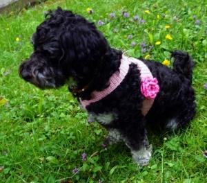 Häkelanleitung Hundegeschirr optional mit hübscher Rose (für kleine Hunde) - Handarbeit kaufen