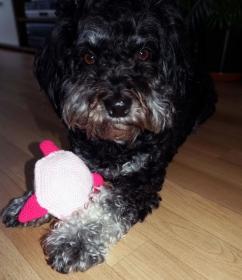 Häkelanleitung Hundespielzeug Schweinchen extra flach ♥ - Handarbeit kaufen
