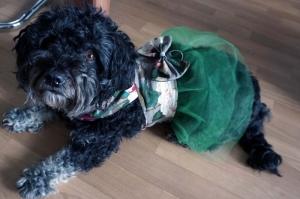 ♡ Hundekleid Leaves ♡ amigoll9 ♡ Deko ♡ Handarbeit ♡ - Handarbeit kaufen