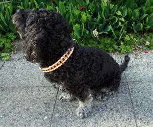 ♡ Hundehalsband Zugbegrenzt Paracord ♡ rosa/orange ♡ Handarbeit ♡ - Handarbeit kaufen
