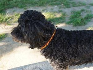 ♡ Hundehalsband Fire Paracord ♡ Farbverlauf/Schwarz♡ Handarbeit ♡ - Handarbeit kaufen