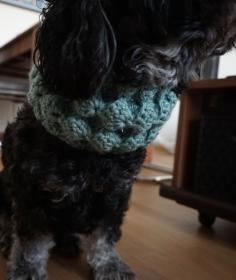Hundeloop / Hundeschal 42cm-52cm ♡ amigoll9 ♡ Handarbeit - Handarbeit kaufen