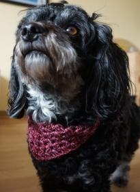 Hundehalstuch in Farbverlaufswolle Rottöne Halsumfang bis 35cm ♡ amigoll9 Handmade - Handarbeit kaufen