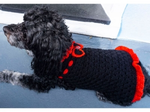 Hundekleid/ Hundesweater ♡ amigoll9 Handmade - Handarbeit kaufen