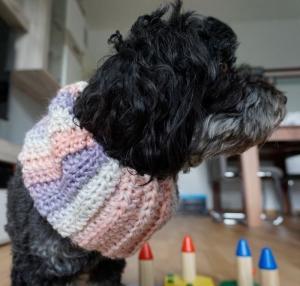 Hundeloop Regenbogen / Hundeschal / Schlauchschal / Snood ♡ 35cm-40cm ♡ amigoll9 ♡ Handarbeit - Handarbeit kaufen