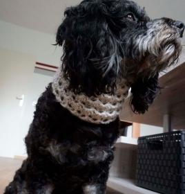 Hundeloop / Hundeschal 36cm-41cm ♡ amigoll9 ♡ Handarbeit - Handarbeit kaufen