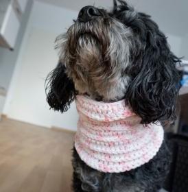 Hundeloop / Hundeschal / Baumwolle/Acryl / Schlauchschal / Snood ♡ 32cm-35cm ♡ amigoll9 ♡ Handarbeit - Handarbeit kaufen