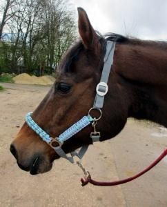 Pferdehalfter Ice Blue handgefertigt handgemacht Stallhalfter Reithalfter geflochten Paracord Flechthalfter Halfter Pferd Größe Shetty Pony Vollblut Warmblut  - Handarbeit kaufen