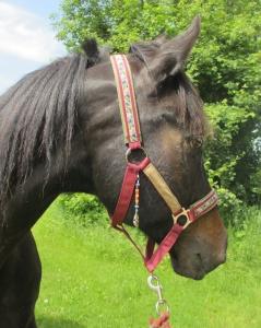 Pferdehalfter Kleine Feder rot handgemacht Stallhalfter/Reithalfter Halfter Pferd Größe Shetty Pony Vollblut Warmblut Kaltblut - Handarbeit kaufen