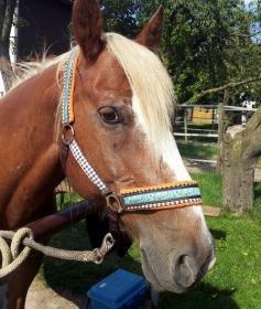 Pferdehalfter Pony Express Stallhalfter/Reithalfter mit weicher Fleece Polsterung im Country Stil