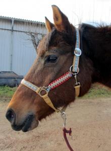 Pferdehalfter Pony-Love handgemacht handgefertigt Stallhalfter Reithalfter geflochten Paracord Halfter Pferd Größe Shetty Pony Vollblut Warmblut Kaltblut - Handarbeit kaufen