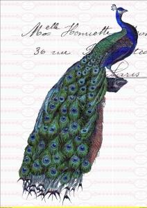 Bügelbild Brief Pfau Vogel Schrift french Paris A4 NO. 1339 Vintage