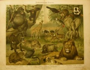 1897 Original Farblithographie-  Äthiopische Fauna - Handarbeit kaufen