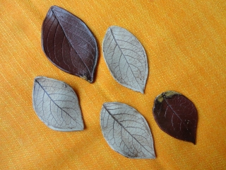 Herbstblätter, 5er-Set, echte Blattabdrücke - Handarbeit kaufen