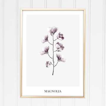 Poster Magnolien, Kunstdruck Pflanzen, Wandbild: Magnolia
