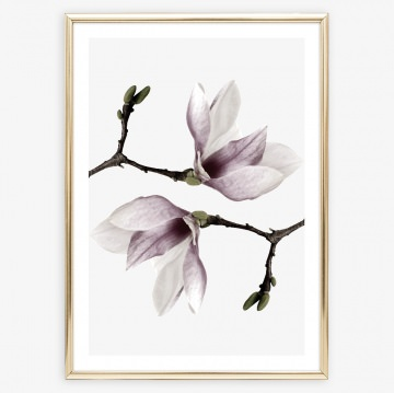 Poster Magnolien, Kunstdruck Pflanzen, Wandbild: Magnolia Twins