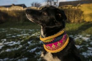 Bunter Hundeloop XL - gestrickter Hundeschal in nordischen Fair Isle Mustern - Handarbeit kaufen