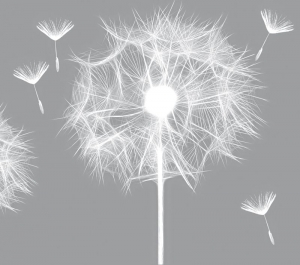 Wandbordüre - selbstklebend   Pusteblume - 12 cm Höhe   Vlies Bordüre mit zarten Pusteblumen