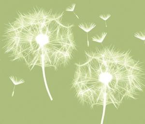 Wandbordüre - selbstklebend | Pusteblume - 12 cm Höhe | Vlies Bordüre mit zarten Pusteblumen - Handarbeit kaufen