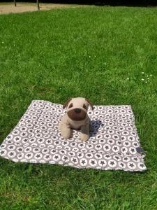 Hundedecke Hundekissen MAX ♥ Einzelstück schöne genäte Decke