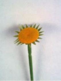 Häkelblumenstiel Gerbera - Handarbeit kaufen