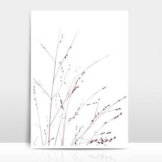 A4 Artprint Gräser