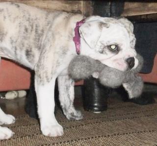 Filzknochen für den Hund
