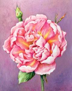 Original Aquarell  Rose, Mischtechnik, Rosa Mundi Bild, Original  Malerei