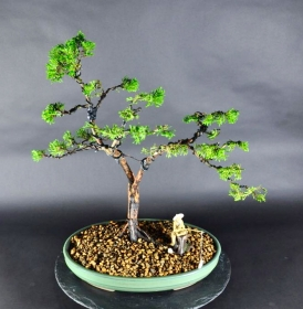 Bonsai Chin. Wacholder (Juniperus chinensis)