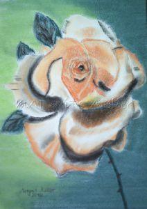 Handgemaltes Bild mit dem Titel Rose gemalt mit Pastellkreide auf Aquarellpapier direkt von der Künstlerin kaufen - Handarbeit kaufen