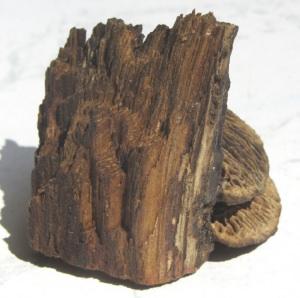 Baumpilz von der Natur geformt für eine Dekoration im Landhausstil kaufen