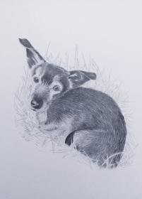 Individuelles Tierportrait in Grafit nach Fotovorlage
